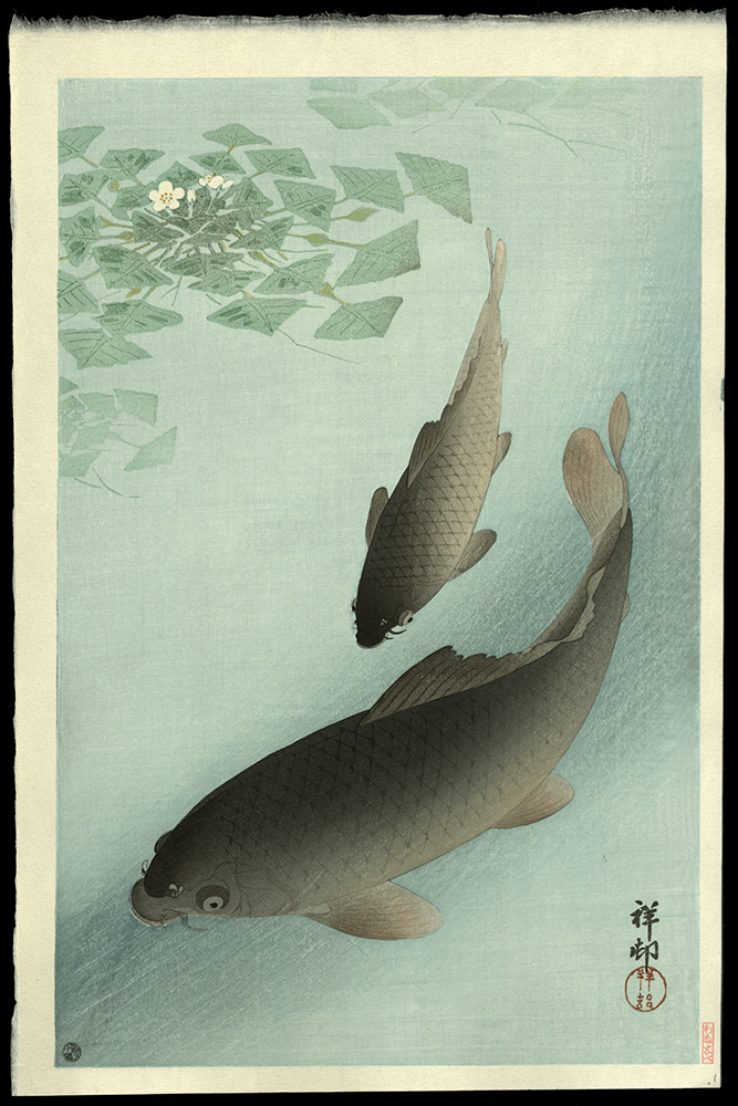 Carp Swimming Around Water-grass