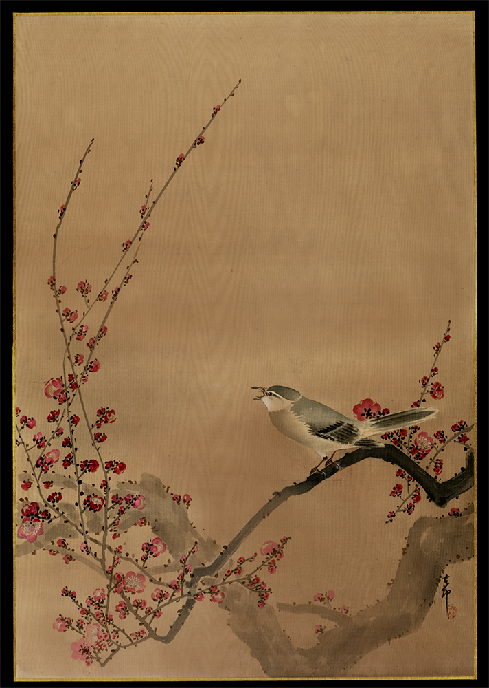 Oriental Bullfinch on Plum Blossom Branch