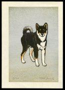Monjiro (Toshi's Shiba)