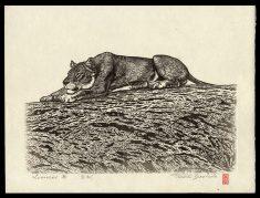 Lioness B