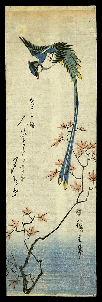 Long Tailed Bird and Maple Branches