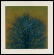 Treetop (blue)
