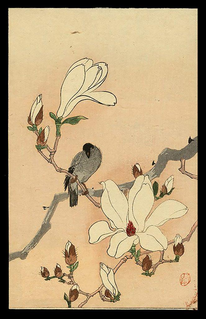 A Bird and Mokuren