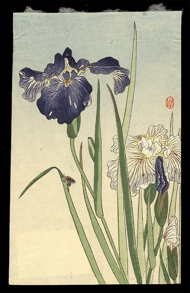 Iris and a Bee