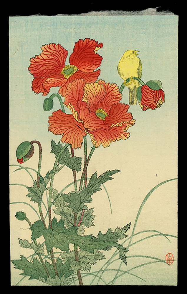 Poppies and Bird