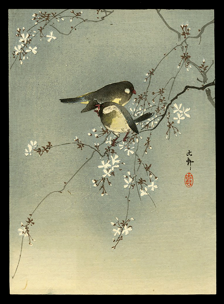 Two Birds on a Cherry-tree