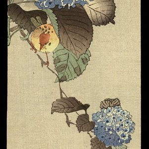 A Song-bird Among Hydrangea Koson