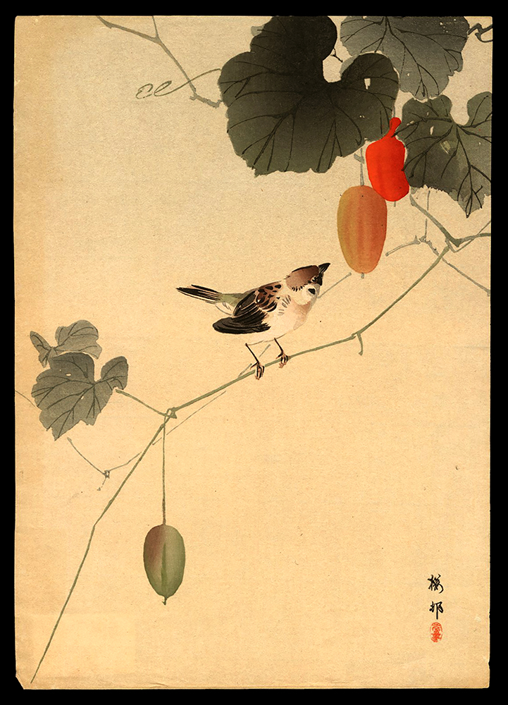 Sparrow on a Vine of Wild Melons
