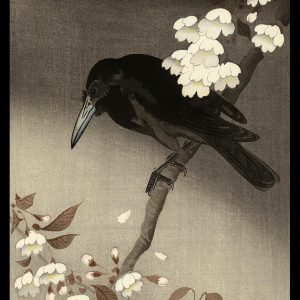 Crow and Cherry Blossoms Keinen