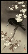 Crow and Cherry Blossoms