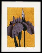 Iris – 30