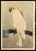 Obatan Parrot