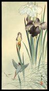 Kingfisher and Irises