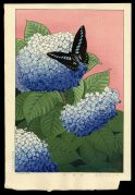 Hydrangea and Butterfly