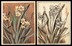 Daffodils and Preparatory Drawing