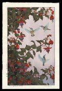 Humming Bird and Fuchsia